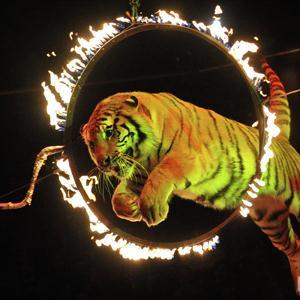 Цирки Сосновоборска